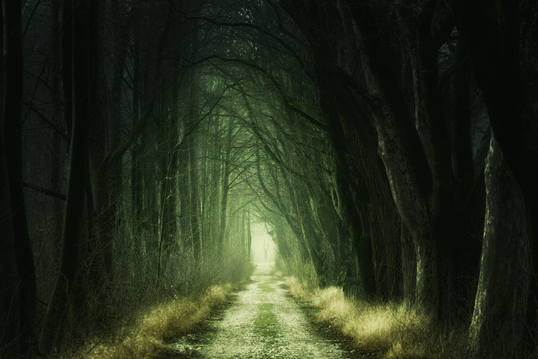 Ein heller Waldweg durch einen düsteren Wald; keine Blätter an den Bäumen; sehr grüne Farbstimmung; Bilder in Büchern