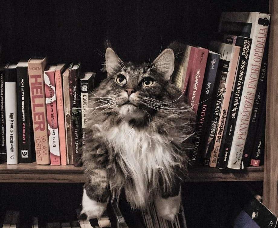 Katze in einem Bücherregal; Beitragsbild von einem Beitrag über Charakterentwicklung